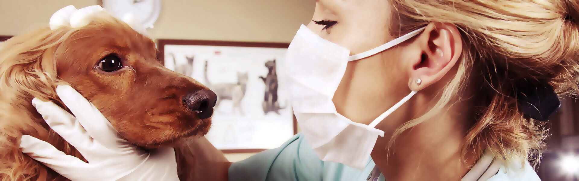 Tierarzt Header Bild